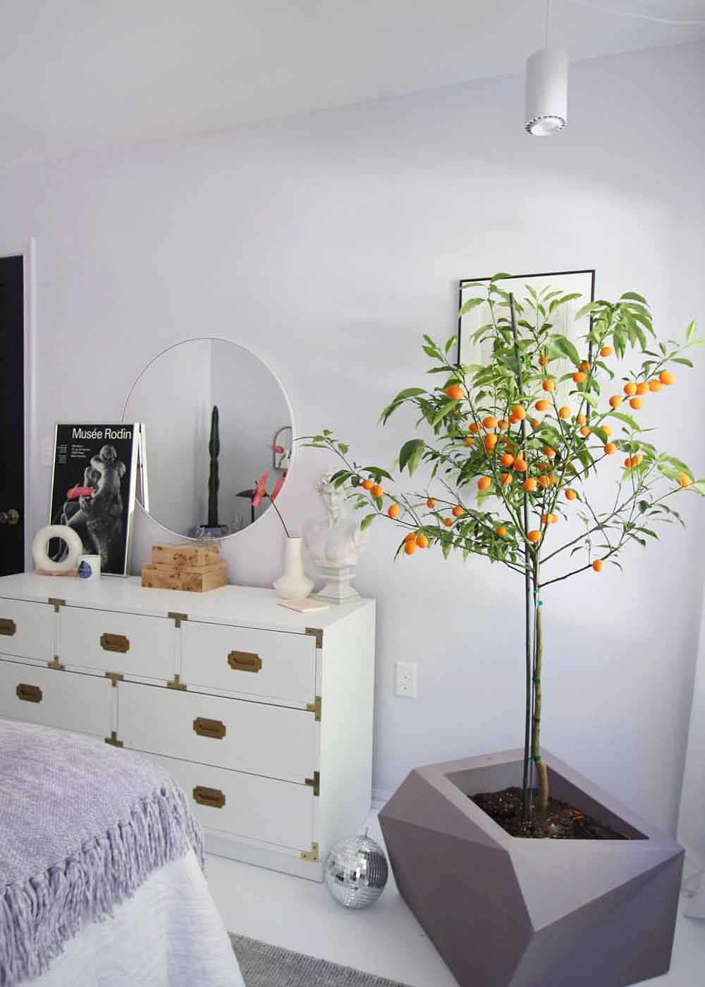 Large 40W White Aspect™ Growlight growing Calamondin Tree