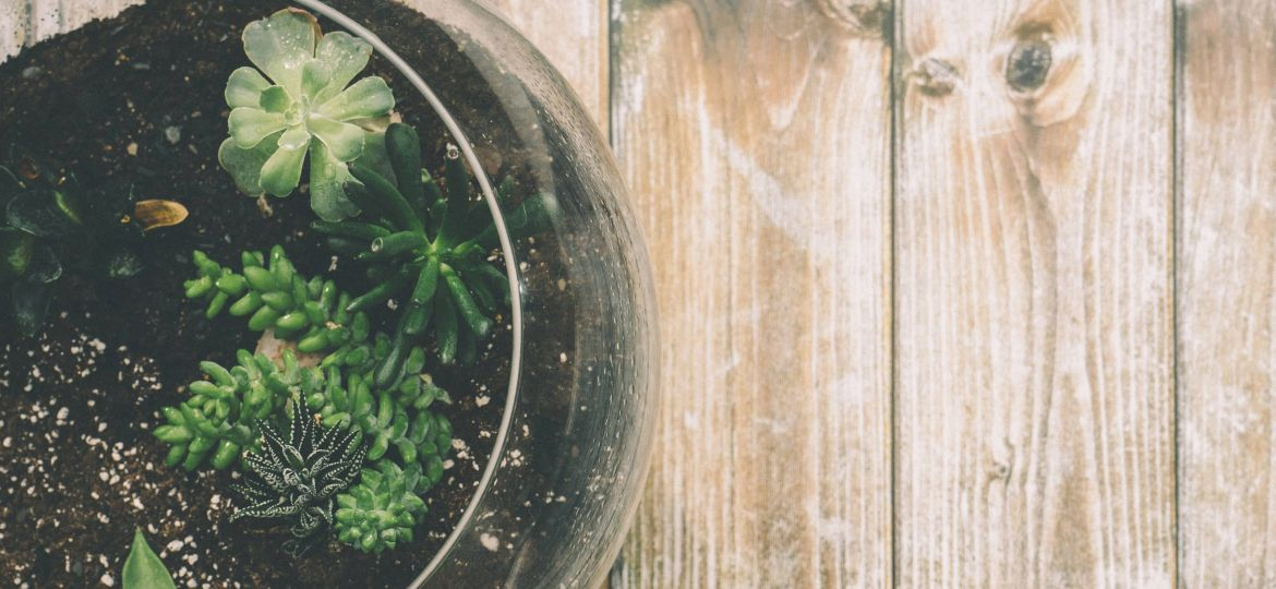 Growing Tips on the Latest Trend: Terrariums