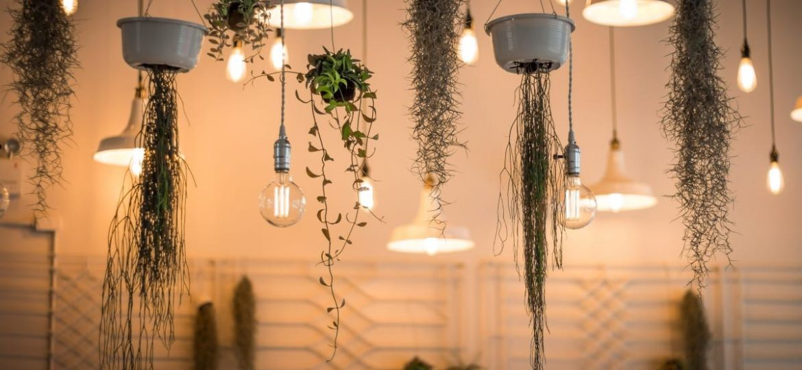 Plant Styling Tips: Enhance Dull Space with Hanging Plants