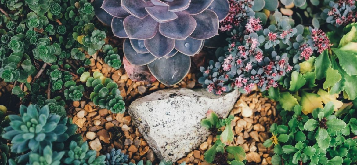 Ultimate Succulent Guide: Growing Tips, Decor & More