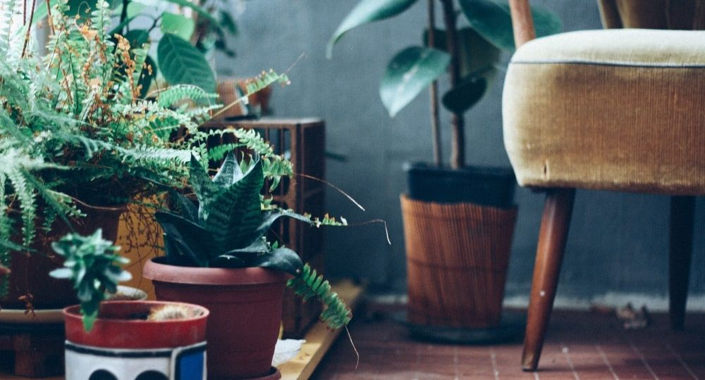5 Simple Tips for Bringing Your Plants Indoors