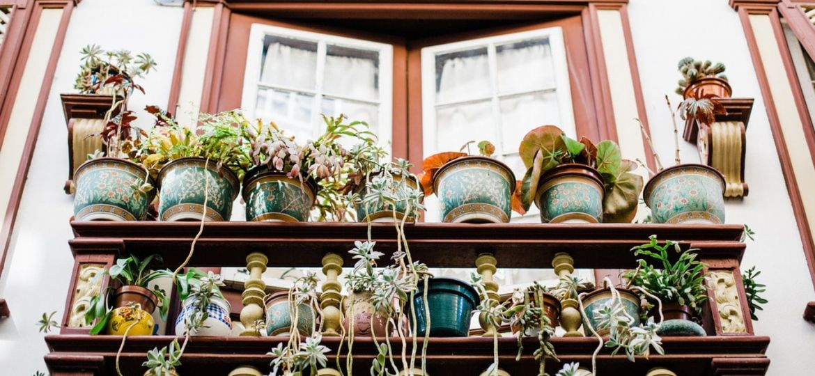 Eco-Friendly Planters Can Save the Earth and Your Wallet