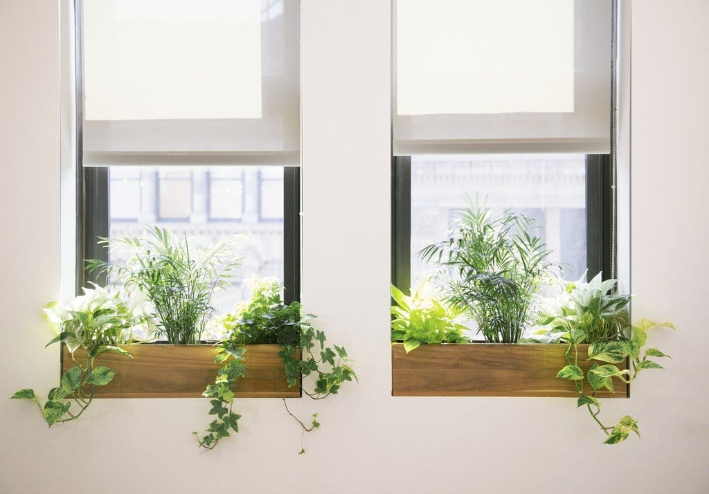 Add Plants to Your Home/ Office