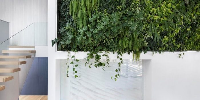residence-courcelette-naturehumaine-montreal-canada-plants-renovation_dezeen_2364_col_0-700x400